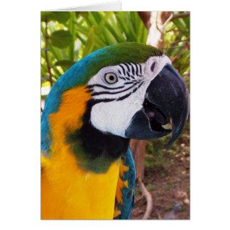 Het Hoofd van de papegaai Kaart