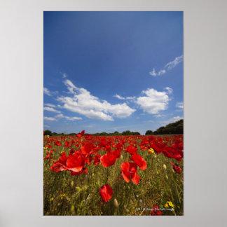 Het Hoogtepunt van het gebied van Rode Bloemen Poster