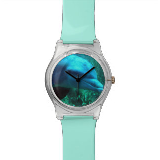 Het Horloge van de dolfijn