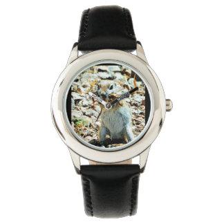 Het Horloge van de Eekhoorn van de Grond van het