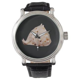Het Horloge van Shell van de kroonslak