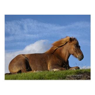Het Ijslandse paard rusten en hemel Briefkaart