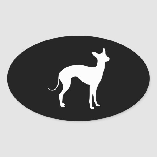 Het Italiaanse Wit van de Windhond op Zwarte Sticker