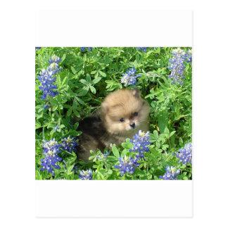 Het Jong van Pom in Blauwe Bonnetten Briefkaart
