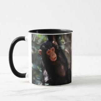 Het jonge hangen van de Chimpansee bij bos Mok