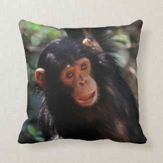 Het jonge hangen van de Chimpansee bij bos Sierkussen