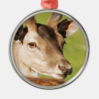 Het jonge slimme wilde dier van Daniel Zilverkleurig Rond Ornament