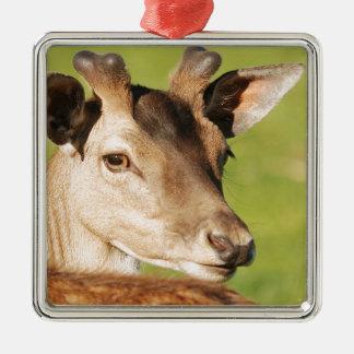 Het jonge slimme wilde dier van Daniel Zilverkleurig Vierkant Ornament