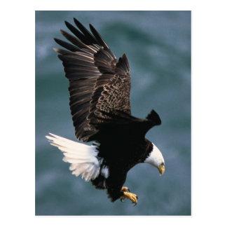 Het kale Briefkaart van Eagle