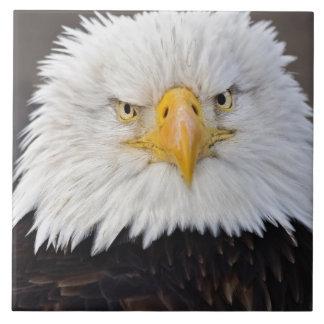 Het kale Portret van Eagle, Kaal Eagle tijdens de  Tegeltje