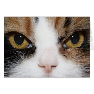Het Kat van het calico Kaart