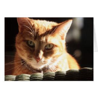 Het Kat van Kute! Briefkaarten 0