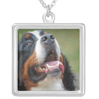 Het Ketting van de Hond van Sennenhund van Berner