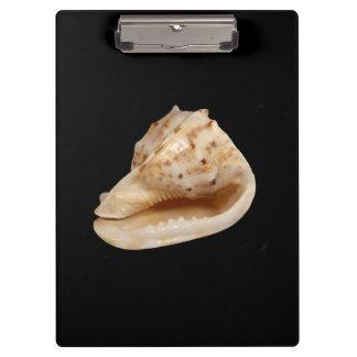 Het Klembord van Shell van de kroonslak