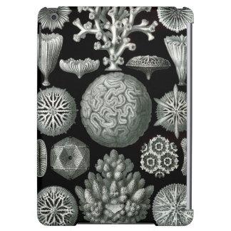 Het Koraal van Ernst Haeckel Hexacorallia