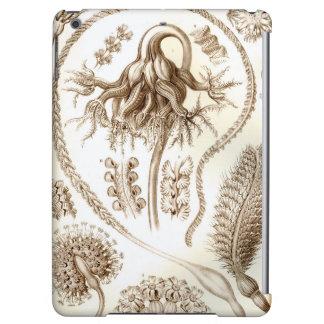 Het Koraal van Ernst Haeckel Pennatulida