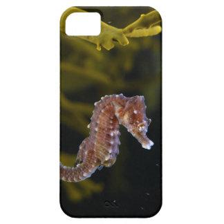 Het kort-gewroete zeepaardje van het Zeepaardje Barely There iPhone 5 Hoesje
