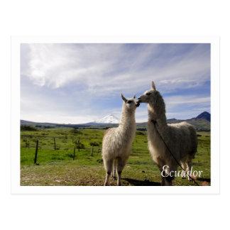 Het kussen lama's Cotopaxi Ecuador Briefkaart