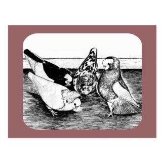 Het Kwartet van de Tuimelschakelaar van Komorner Briefkaart