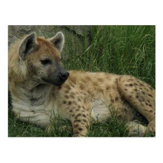 Het lachen het Briefkaart van Hyena's