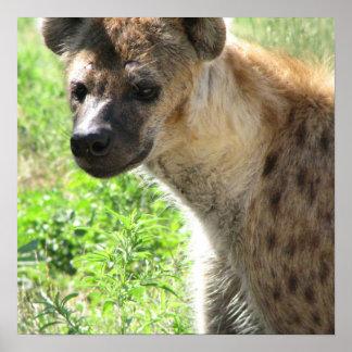 Het lachen het Poster van de Hyena