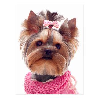 Het Lege Briefkaart van de Hond van het Puppy van