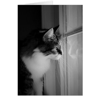 Het Lege Wenskaart van de Bezinning van de kat