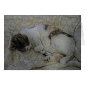 Het Lege Wenskaart van de Kat van de slaap