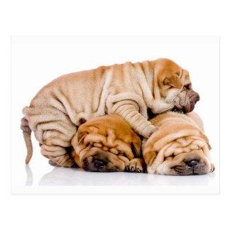 Het leuke Puppy van Shar Pei Briefkaart