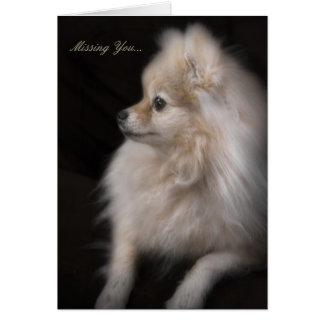 Het Leuke Stellende Puppy Pomeranian van Adorably Kaart