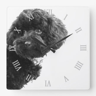 Het leuke Zwart-witte Puppy van de Hond/Fotografie Vierkante Klok