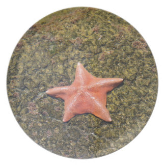 Het leven starfish.JPG Bord