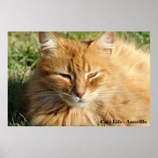 Het leven van de kat - Amarillo Slaap Poster