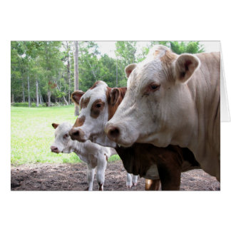Het Leven van het boerderij (7416) - Koeien Briefkaarten 0