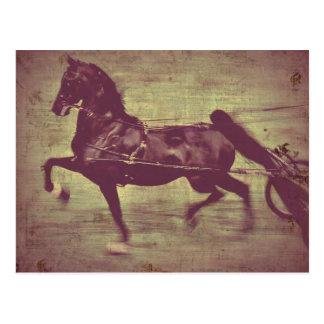Het Lied van Saddlebred Briefkaart