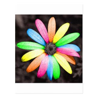 Het madeliefjebloem van de regenboog briefkaart