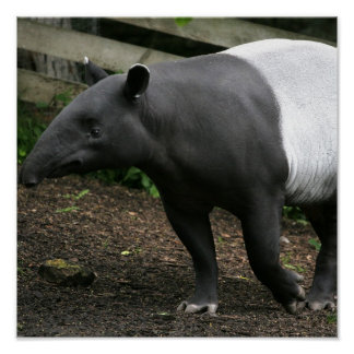 Het Maleise Poster van de Tapir