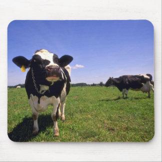 Het melkvee van Holstein Muismatten