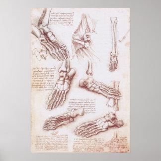 Het menselijke Bot van de Voet van het Skelet van Poster