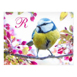 Het Monogram van de Vogel van de lente Briefkaart