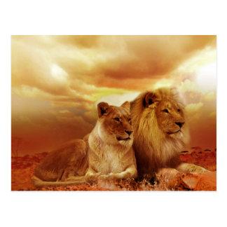 Het mooie Briefkaart van het Paar van de Leeuw