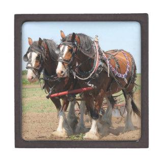 Het mooie clydesdalepaarden ploegen premium bewaar doosje