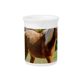 Het mooie Pony van Shetland Drink Pitcher