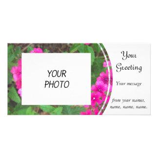 Het mooie roze ijzerkruid bloeit bloemenfoto kaart