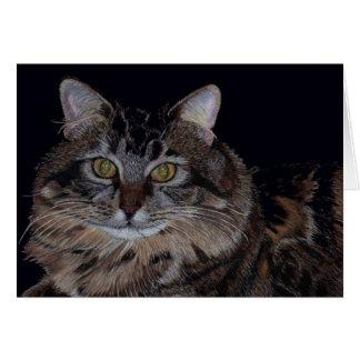 Het mooie Wenskaart van de Kat van de Wasbeer van