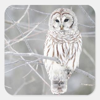 Het mooie Witte Ontwerp van de Uil van de Sneeuw Vierkante Sticker