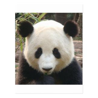 Het nadenken Panda Briefkaart