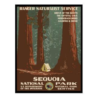 Het Nationale Park van de sequoia Briefkaart