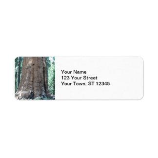 Het Nationale Park van de sequoia Etiket