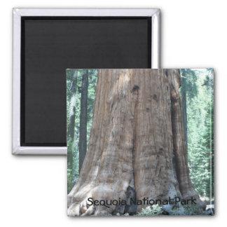 Het Nationale Park van de sequoia Magneet